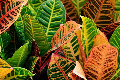 La Mesonera | Planta de Interior